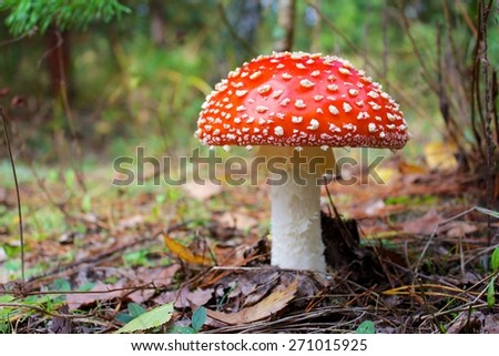 Toadstool on a fall landscape floor