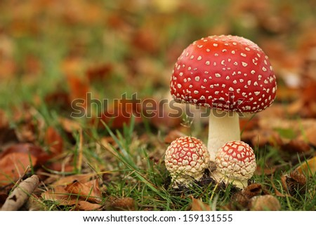 Toadstool with two little ones - stock photo