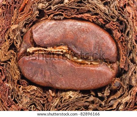 Tobacco and grain coffee - stock photo