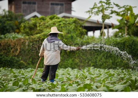 Tobacco farmers of Thailand
