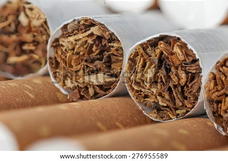 Tobacco in cigarettes with brown filter close up - stock photo