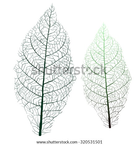 tobacco leaf with veins - stock photo