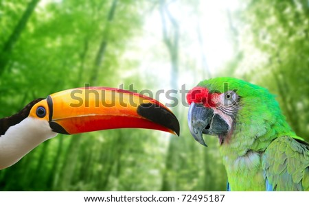 Toco toucan and Military Macaw Green parrot in jungle in love birds [Photo Illustration]