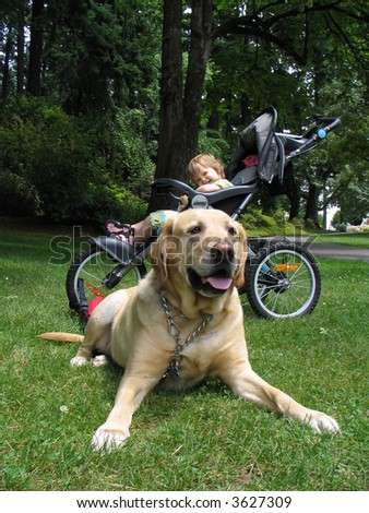 Toddler and Yellow Lab - stock photo