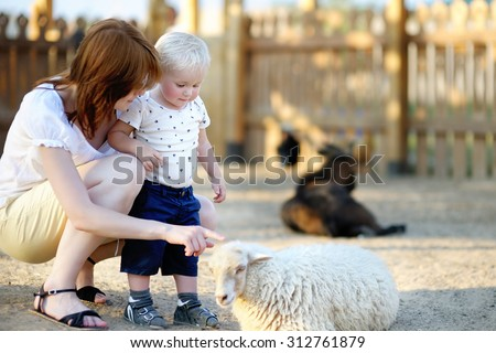 Toddler boy and his young mother looking at sheep at zoo - stock photo