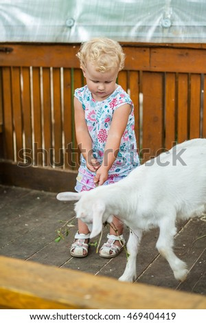 Toddler girl play with the lamb in the petting zoo