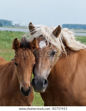 Together, duo portrait of a mare and her foal in a Dutch landscape - stock photo