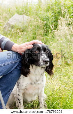 Togetherness- close up shot of spaniel sitting close to her master while he  strokes her head. - stock photo