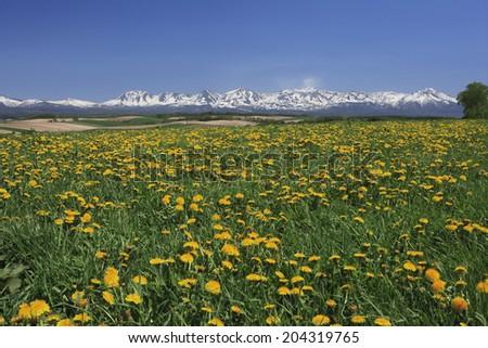 Tokachi Mountain Range And Dandelion - stock photo