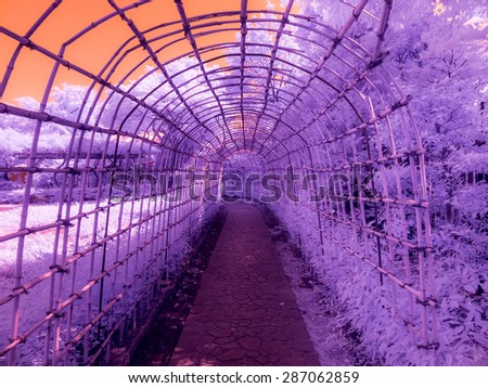 Tokyo, Japan. An arbor/trellis made of bamboo. Taken with a specially modified camera to only see enhanced infrared light invisible to the human eye. - stock photo