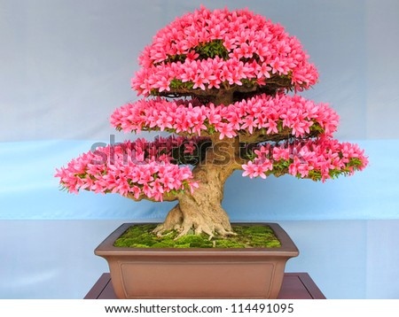 TOKYO, JAPAN - APRIL 2012 : Bonsai potted tree # 7 - stock photo