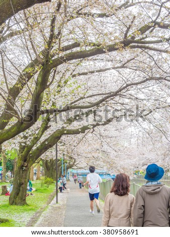 TOKYO, JAPAN - APRIL 3: Cherry blossoms along the Zenpukuji River on April 3, 2015 in Tokyo, Japan. Enjoying the transient beauty of cherry blossoms is the Japanese traditional custom.