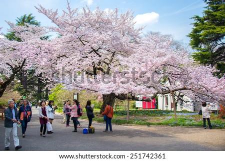 Tokyo, Japan - April 2, 2014: People sitting in Shinjukugyoen park seeing Sakura blossom at Shinjuku, Tokyo, Japan on April 2, 2014. - stock photo