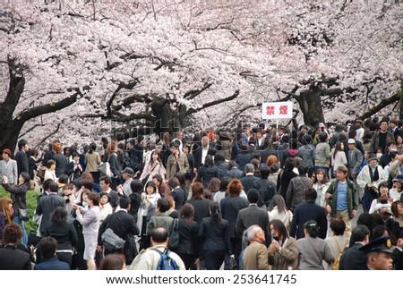 TOKYO, JAPAN - APRIL 4 : people watching sakura festival at Chidorigafuchi in spring season with Cherry Blossom taken on April 4, 2009  - stock photo