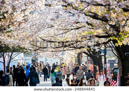 Tokyo, Japan - April 6, 2014:  Sakura blossom at Kitanomaru Garden, Tokyo, Japan on April 6, 2014. - stock photo