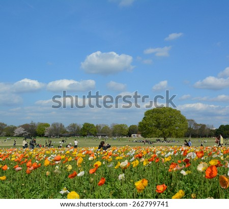 TOKYO, JAPAN - APRIL 2 : Showa park in spring with poppy flower field taken on April 2, 2013 in Tokyo. Showa park is one of the most popular flower park and sakura sightseeing spot in Tokyo. - stock photo