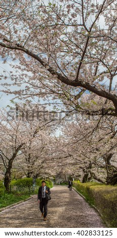 TOKYO, JAPAN - APRIL 7TH 2016. Tourist and locals enjoying cherry blossoms at Chidorigafuchi, a popular sakura viewing spot in Tokyo, during Japan's annual cherry blossom festival.