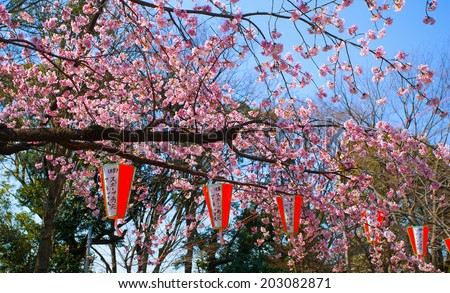 TOKYO, JAPAN - MARCH 24: Cherry blossom in the Ueno Park on March 24, 2014 in Tokyo, Japan.  - stock photo