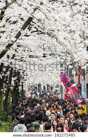 Tokyo, Japan - March 24, 2013: Japanese people is coming to see Sakura blossom at Nakameguro, Tokyo, Japan - stock photo