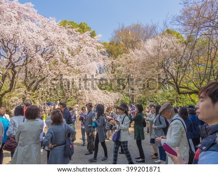 TOKYO, JAPAN - MARCH 31: The Shidare-zakura cherry blossoms at Rikugien Garden  on March 31, 2016 in Tokyo, Japan. Enjoying the transient beauty of cherry blossoms is the Japanese traditional custom.