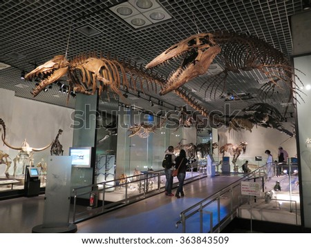 TOKYO, JAPAN - MAY 22 : Fossil in National Museum of Nature and Science in Ueno park taken May 22, 2016 in Tokyo. - stock photo
