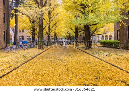 TOKYO, JAPAN - NOV 30, 2014: The Hongo campus of University of Tokyo in Autumn. The main Hongo campus occupies the former estate of the Maeda family, Edo period feudal lords of Kaga Province. - stock photo
