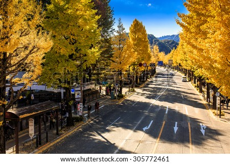 TOKYO, JAPAN - NOVEMBER 17. Ginkgo street view from pedestrian bridge on 17 November 2014 . The street in Hachioji during autumn that has beautiful Ginkgo along the length of the street - stock photo