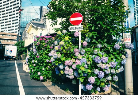 Tokyo - May 2016: Small lane with Ajisai flowers and traffic sign. - stock photo