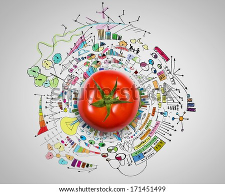 Tomato against white background with business sketches - stock photo