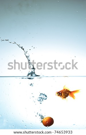 Tomato fall and goldenfish  in water - stock photo