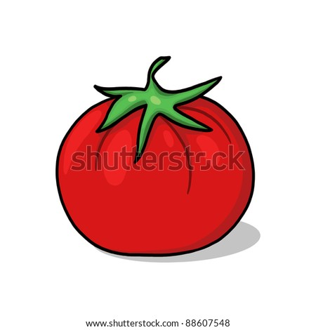 Tomato illustration; Red fresh tomato freehand drawing