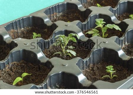 Tomato plant photo - stock photo