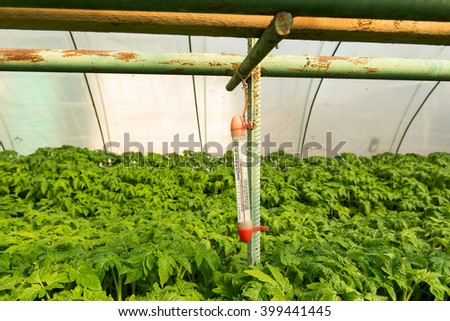 Tomato plants and cucumber plants  in vegetable greenhouses. Tomato seedling before planting into the soil, greenhouse plants, drip irrigation, greenhouse cultivation of tomatoes in agriculture - stock photo