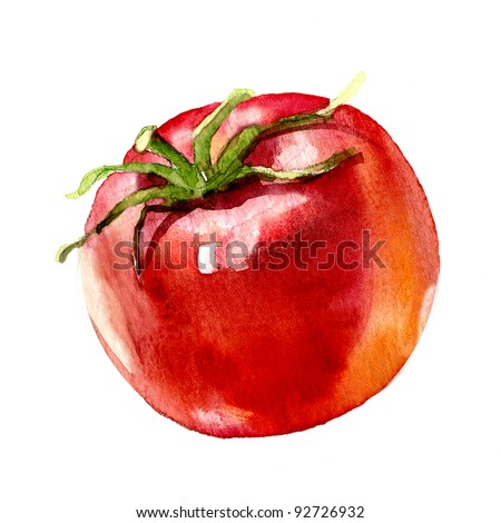 tomato. watercolor painting on white background - stock photo