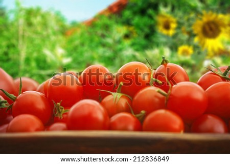 Tomato yield of a urban garden, presented in a wooden bowl - stock photo