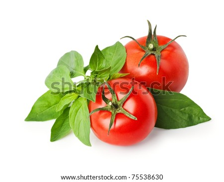 tomatoes and basil isolated on white. - stock photo