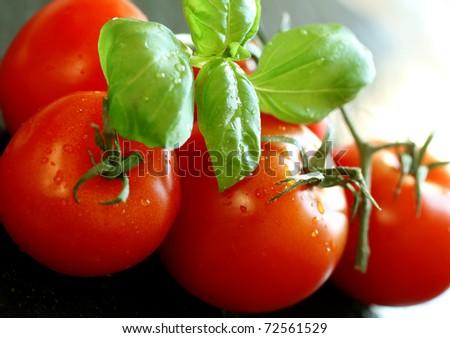 tomatoes and basil on black background - stock photo