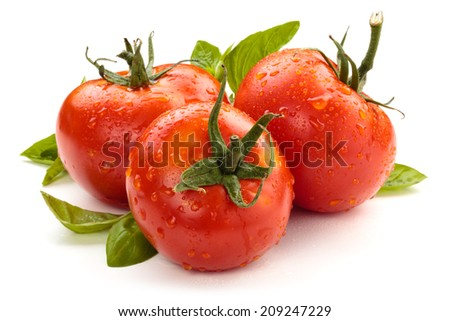 Tomatoes and basil on white background. - stock photo
