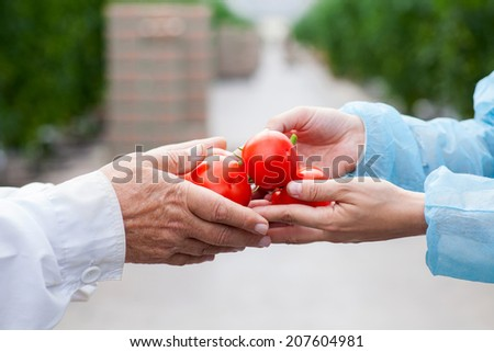 tomatoes arms transfer - stock photo