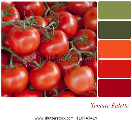 Tomatoes background colour palette with complimentary swatches. - stock photo
