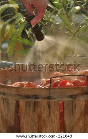 Tomatoes being washed - stock photo