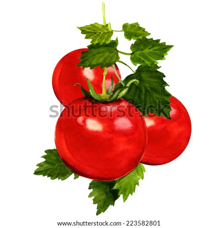 tomatoes branch with leaves on white - stock photo