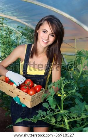 Tomatoes growing - stock photo