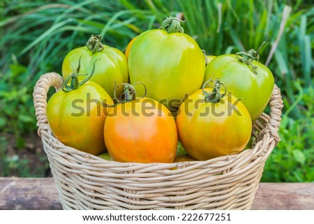 tomatoes in basket place on a timber - stock photo