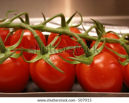 Tomatoes in line - stock photo