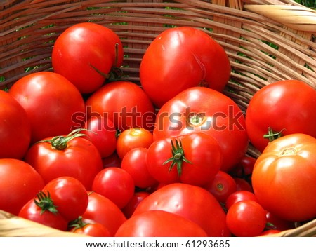 Tomatoes in Woven Basket - stock photo
