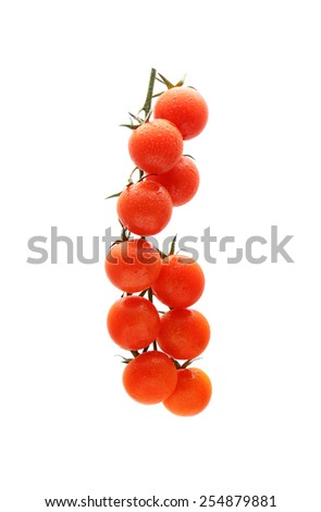 Tomatoes on the vine with drops of water - stock photo