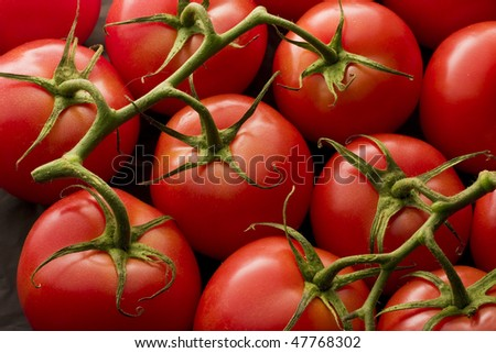 Tomatoes on vine with soft lighting - stock photo