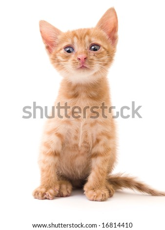 tomcat isolated on white background cat pussy expressions emotions