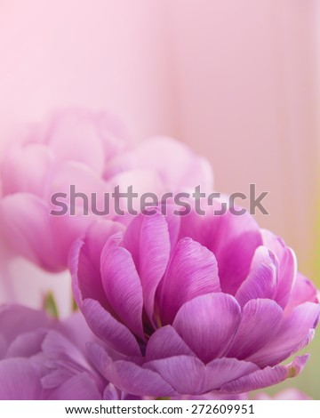 Toned Blurred Flower Background.  - stock photo